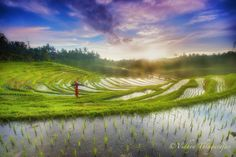 Photo Woman in rice terraces by Vidhya Thiagarajan on 500px