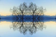 Mirror Trees by Stephen Chapman