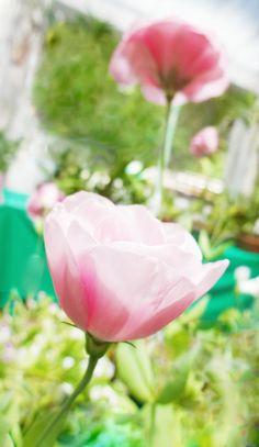 Twee: Flores para decorar um ambiente :)