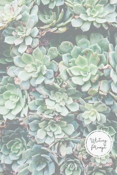 Here's a quick writing prompt for you today, inspired by the succulents on the July Cozy Writer's Room calendar! Set a timer and write using this picture as inspiration.