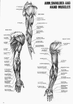 Ref Anatomy