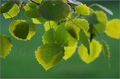 Summerfeeling Blätter Romantik