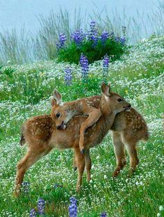 30 süße Baby Tiere - Sehen sie doch nicht niedlich aus?