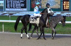 Tom's Ready(2013)More Than Ready- Goodbye Stranger By Broad Brush. 4x5 To Northern Dancer, 5x5x5 To Turn-To. 9 Starts 1 Win 4 Seconds. 2nd Louisiana Derby(G2), 3rd Lecomte(G3), Street Sense. 9 Starts 1 Win 4 Seconds. $312,220. More Northern Dancer Bloodlines But With Turn-to Lineage Added In. Has The Breeding But May Be A Cut Below Some Of These.