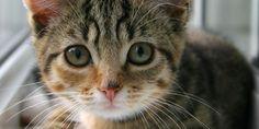 6 aliments à ne jamais donner à un chat