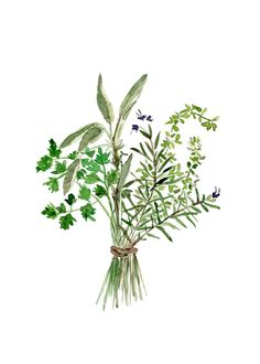 Herbs Bouquet Art watercolor painting by TheJoyofColor