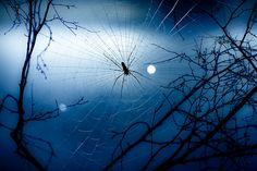 """Spider"" by Tommy Ga-Ken Wan (TGKW on Flickr)"