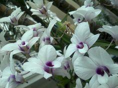 Orquídeas no Miraflores Laranjeiras