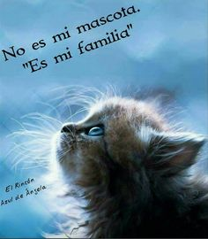 Precioso Miss My Best Friend, Dog Body Language, Image Cat, Mundo Animal, Cat Life, Neko, Animals Beautiful, Animals And Pets, Cats And Kittens