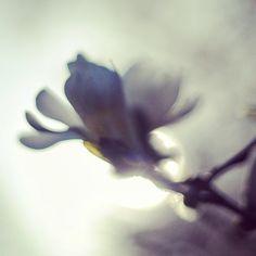 Ghost Magnolia