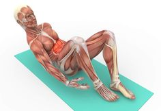 Dead Bug Exercise, Plank Hip Dips, Side Plank, Rectus Abdominis Muscle, Bicycle Kick, Causes Of Back Pain, Lower Back Muscles, Hips Dips, Muscle Anatomy