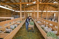 Sheep Shelter, Goat Shelter, Cattle Farming, Goat Farming, Cabras Boer, Sheep Feeders, Sheep House, Cattle Corrals, Goat Shed