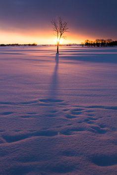 Morning snow, Kitahiroshima, Hokkaido, Japan.