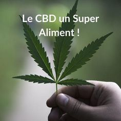 Le CBD un Super- Aliment ! Stress, Cannabis, Hemp, Plant Leaves, Genre, Green, Drug Withdrawal, Arthritis, Hemp Oil