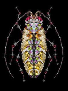 Another 'Jewelled Bettle' by Garth Knight.