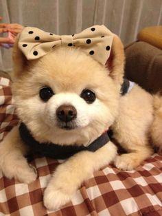 cachorros fofos | Tumblr