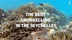 Top 7 Snorkelling Spots, Mahe