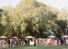 Photography : Lisa Lefkowitz   Wedding Planning : Rosemary Events   Decor, Floral + Event Design : Sillapere   Event Planning : Sillapere Eco Events Read More on SMP: http://www.stylemepretty.com/2012/06/29/healdsburg-wedding-at-chalk-hill-by-rosemary-hattenbach-nicole-sillapere/