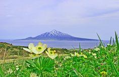 別名花の浮島! 北海道礼文島でフラワートレッキング