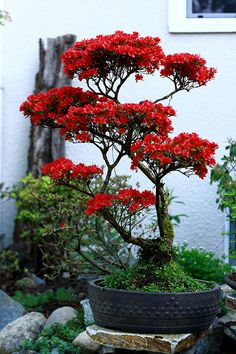 Bonsai tree. Love love love.