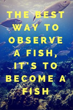 Here's your Daily Quote!  Us, we are taking off to do some Fishy Stuff.  Here we come Ocean!