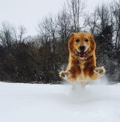 This fan's pup Charlie loves fresh #snow! How does the snow make your #pets feel? #ItsAmazingOutThere #Spring #Pets