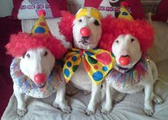 For the clown hunter lol The only clowns I'll ever like