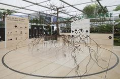 This is Studio collaborated with Physical Pixels to design and build a stand at Chelsea Flower show for East Malling Research.