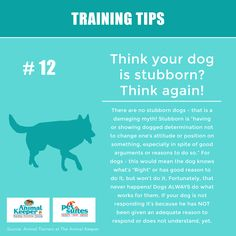 Training Tip – Think your dog is stubborn? Think again! - The Animal Keeper Dog Training Videos, Training Your Dog, Brain Training, Teach Dog Tricks, Easiest Dogs To Train, Aggressive Dog, Dog Agility, Dog Crate, Dog Behavior