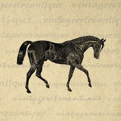 Antique Horse Image Digital Printable Download Graphic Illustration Vintage Clip Art. High resolution digital graphic clip art for printing, fabric transfers, and many other uses. Real printable vintage art. Antique artwork. This graphic is high quality at 8½ x 11 inches large. A Transparent background png version is included.