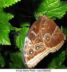 A brown spotted butterfly rests on a leaf.