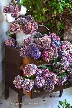 Hydrangeas stacked inside a dresser  /  via FunkyJunkInteriors.net
