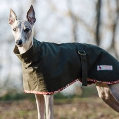 dog coat whippet roll neck coat by redhound for dogs | notonthehighstreet.com