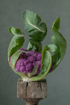 Purple Cauliflower from her Pedestal series by Lynn Karlin ©. All rights reserved