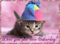Don't you just love Saturday? cat days kitty days of the week saturday weekdays happy saturday saturday greeting