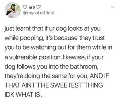 I learnt this a while ago after I searched up why my dog was always in the bathroom with me. I'm not even kidding. I'd walk into my bathroom and she'd be right there behind me. And yeah she looks at me while she is taking the poo.