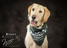 Rescue Me with WP – Jerry Green Dog Rescue | WP Studio - dog photography studio Lincolnshire & yorkshire