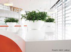 Interieurbeplanting | Kantoorplanten | Planten | Kantoor | Hydrocultuur | Luxe | Onderhoud | Kunstplanten | Potten | Binnenhuisarchitectuur | Inrichting | Bedrijven | Groen | Stijl