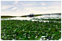 "airboat tour - Everglades Florida Go to http://iBoatCity.com and use code PINTEREST for free shipping on your first order! (Lower 48 USA Only). Sign up for our email newsletter to get your free guide: ""Boat Buyer's Guide for Beginners."""