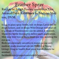Training Your Pet Parrot Parrot Pet, Parrot Toys, Glass Spray Bottle, Glass Bottles, Doterra, Wild Orange Essential Oil, Bird Mom, Parrot Feather, Budgies