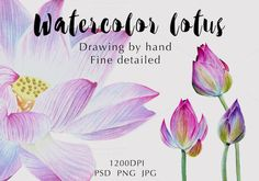 Watercolor lotuses collection by Verlena's Corner on @creativemarket