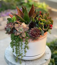 Shop 200 varieties of Succulents Online and 5 Monthly Subscription Boxes. Our Rare Succulents are gorgeous & healthy. Succulents are shipped year round with Care Instruction. Succulent Bowls, Succulent Gardening, Succulent Arrangements, Succulent Terrarium, Container Gardening, Indoor Gardening, Succulents In Containers, Cacti And Succulents, Planting Succulents