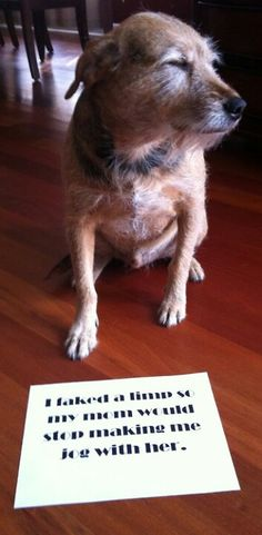 Dog Shaming. This is a pretty smart dog