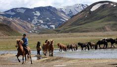 Pony trekking in Iceland. No, I'm not kidding.