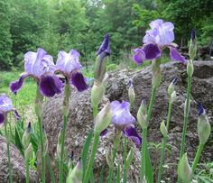 Phenology: Learn how to follow Nature's Signs in our Almanac gardening blog.