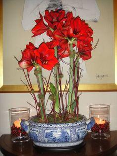 Amaryllis mit Zwiebeln in einer chinesischen Schale
