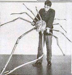 Le crabe-araignée géant du Japon Décrit pour la première fois en 1836  Cette immense chose marine, très appréciée de certains amateurs de fruits de mer, peut peser plus d'une quarantaine de livres et s'étendre sur plus de 18 pieds, soit plus de cinq mètres. Pour se protéger dans les fonds marins, il recouvre sa carapace d'éponges de mer et d'autres petits animaux, afin de masquer sa présence. On le retrouve habituellement près des cheminées hydrothermales, à plus de 600 mètres sous l'eau.