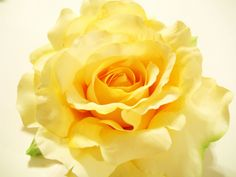 """Yellow Rose of Texas Large Rose Hair Clip""""VERY REAL looking"""" for Wedding Flower Girl Bride Prom Spring Flower also Lapel or Hat (20.00 USD) by MyFairyJewelry"""