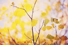 Sin título | Flickr: my wonderful tree in my backyard, mm autumn =)
