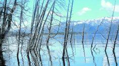 Para amantes del buceo, el bosque sumergido es una tentación. (es una falla geológica que va empujando el bosque hacia el lago Traful) - Neuquén -